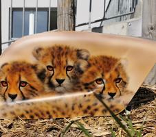 Drei Jaguarkinder